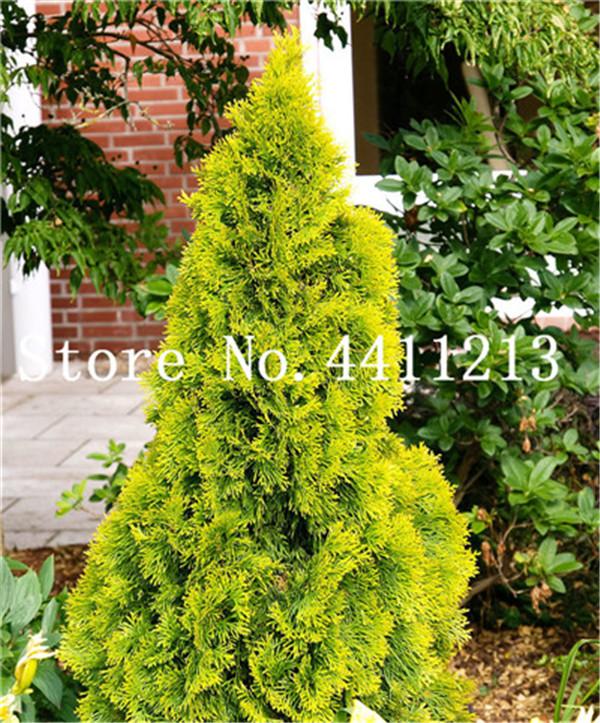 80777-01-BAKI_20120427214100