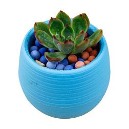 DHL Colorful Plant Pot Plastic Round Sucuulent Plant Pot Home Office Desktop Garden Deco Garden Pots Gardening Tool