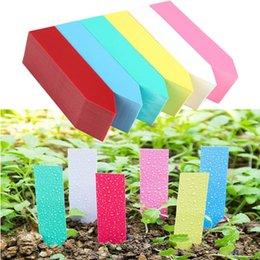 100 pcs//set de plante de jardin pot Marqueurs en Plastique Jeu balises Nursery graines étiquettes