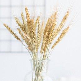 Fleurs Séchées Plantes de Jardin 12pcs Épis de Blé Couleurs Primaires